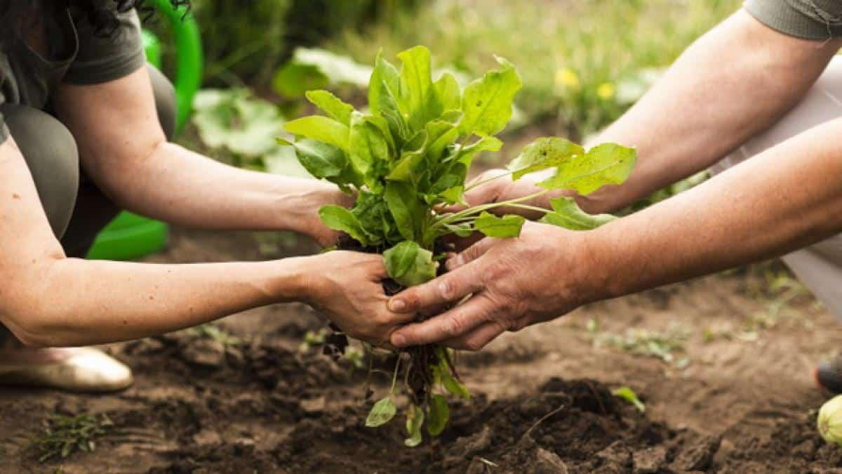 El Ozono, el mejor aliado para combatir a los nematodos en la agricultura